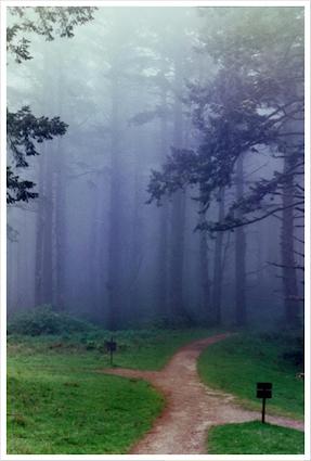 Crossroads in the Wilderness